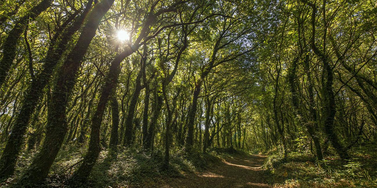 bosque encantado camino inglés