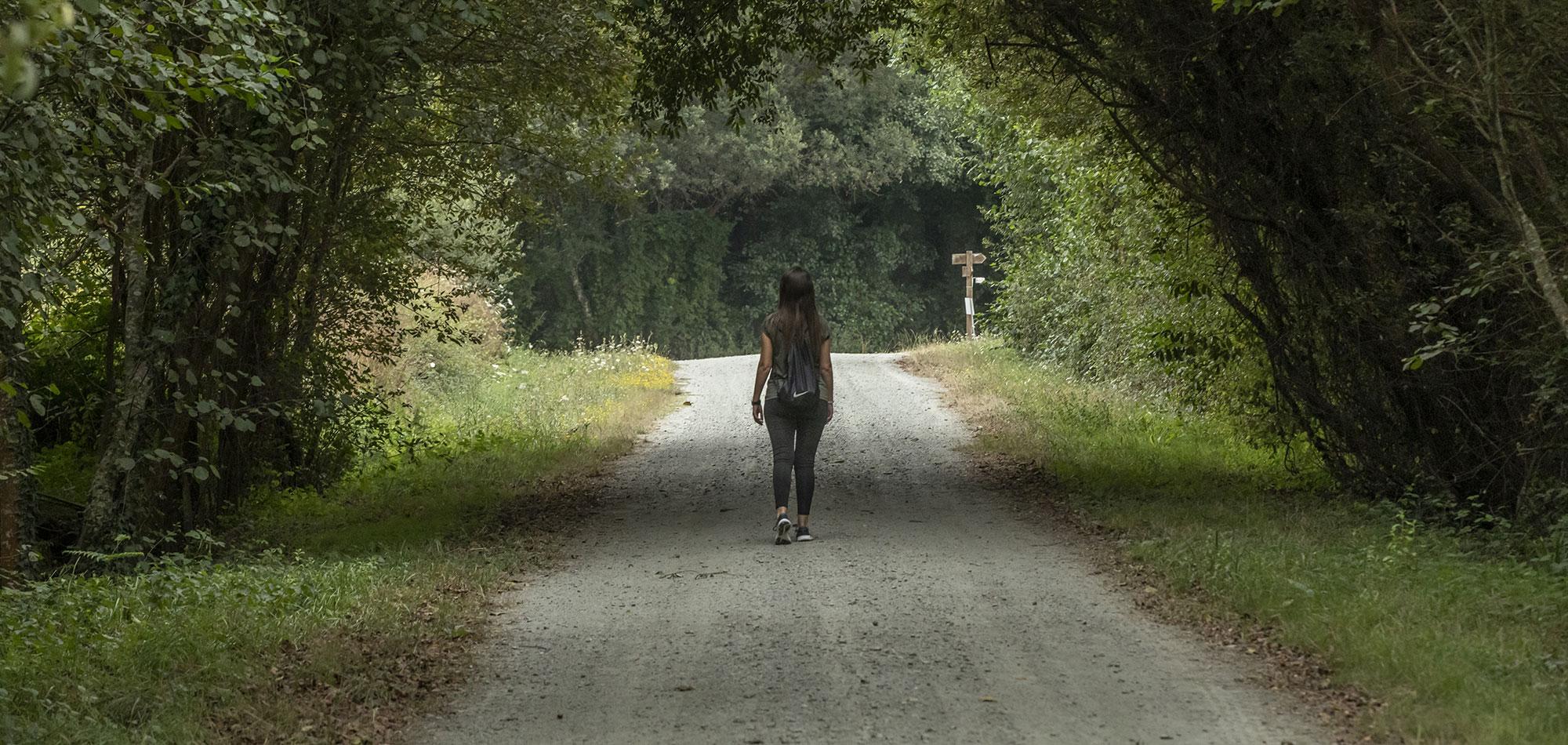 Camino do bosque de Abegondo
